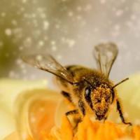 Allergie estive in agguato? Ecco come difendersi