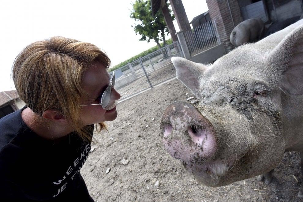 La piccola fattoria di Federica dove i maiali muoiono di vecchiaia