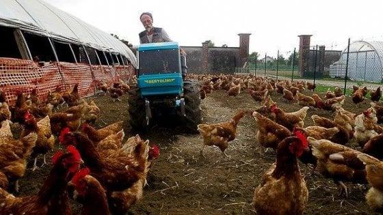A Santena la cascina delle galline felici, dove gli ultimi trovano riscatto