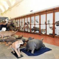 Fondazione Torino Musei diventa regionale e si allarga a quello di Scienze