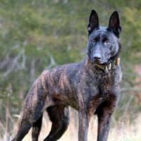 Spara e ammazza un cane temendo di essere aggredito, poi si costituisce