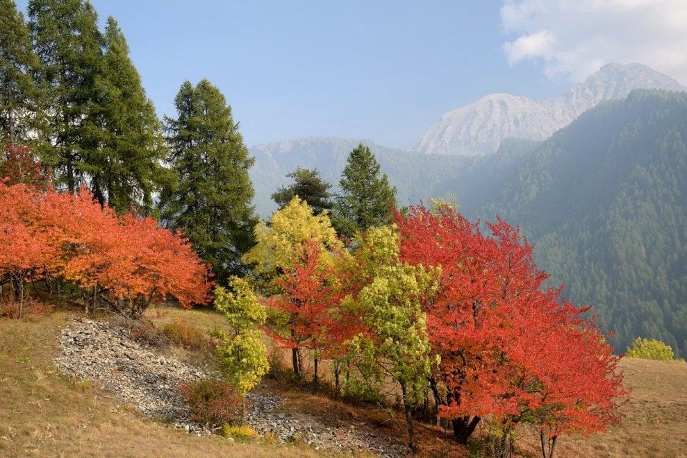 Val di Susa, la siccità fa esplodere in anticipo il foliage d'alta montagna