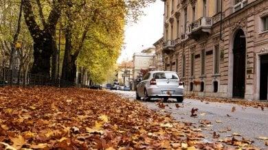 Torino, il Comune paga a rate gli alberi per il viale