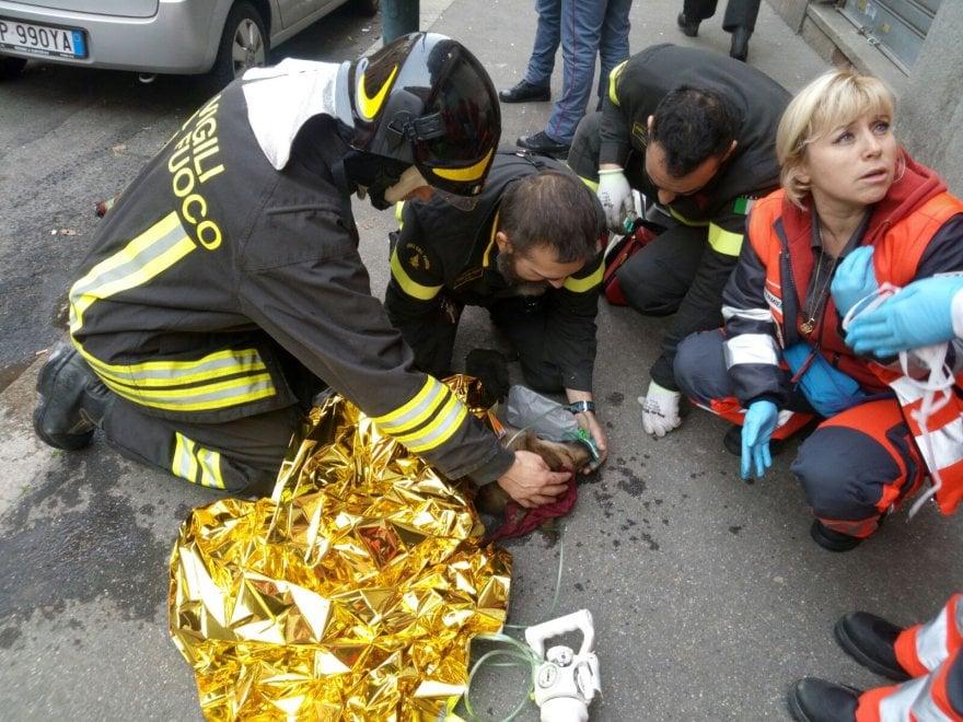 Torino i pompieri salvano con l 39 ossigeno il cane for Repubblica homepage it