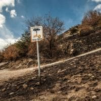 Val Susa, dopo i devastanti incendi i segni del fuoco sui boschi sopra Mompantero