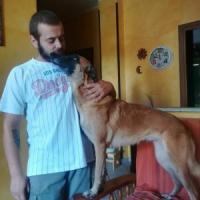 Chivasso, giovane di 26 anni ucciso dal cane che addestrava