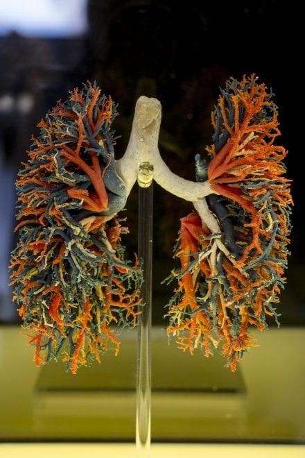 Torna la mostra Human Bodies, il corpo dell'uomo senza segreti