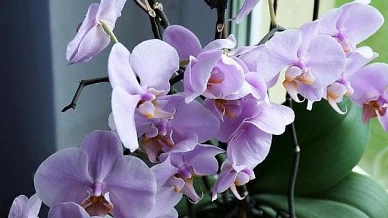 Orchidea, quando la cosmesi naturale diventa passione e bellezza