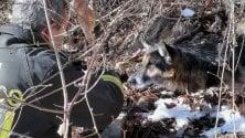 Villar Pellice, vigili del fuoco in missione per salvare un cane nel bosco