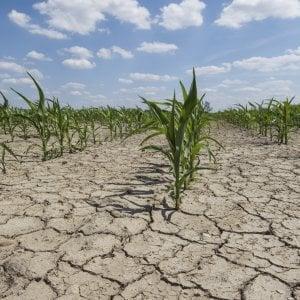 Siccità, in Piemonte danni agricoli per oltre 185 milioni: la Regione chiede aiuto al Ministero