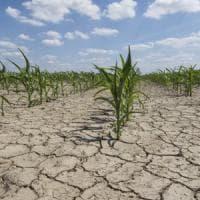 Siccità, in Piemonte danni agricoli per oltre 185 milioni: la Regione chiede