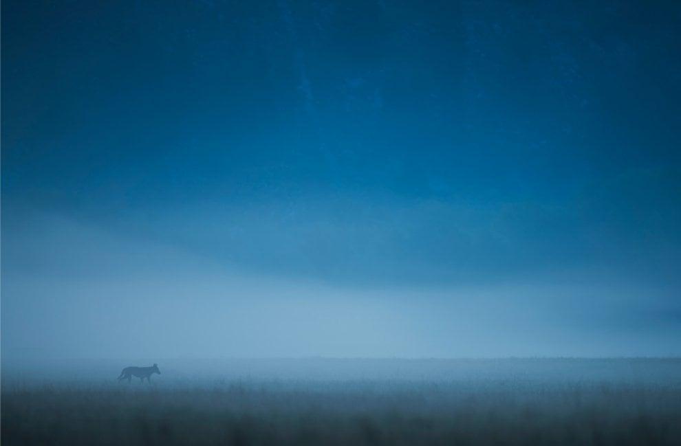 Fotografia, ecco le immagini più belle del concorso sui Parchi nazionali