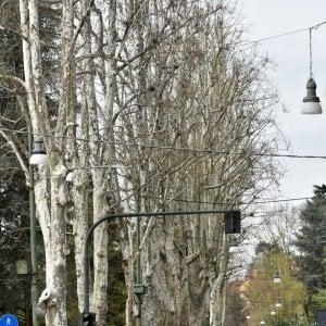 """""""La primavera? Non sboccia. A Torino è in ritardo di 15-20 giorni"""""""