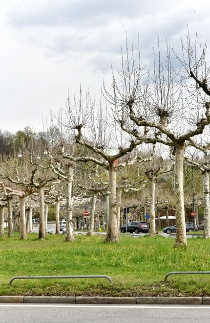 I viali di Torino ancora spogli, aspettando la primavera