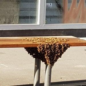 """Il caldo nel Torinese fa spuntare migliaia di api: uno sciame """"occupa"""" la fermata del bus a Nichelino"""