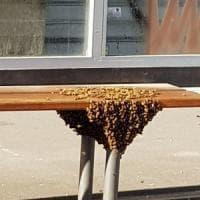 Il caldo nel Torinese fa spuntare migliaia di api: uno sciame