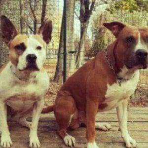 Oglianico, affida i suoi due cani a una pensione ma glieli restituiscono morti