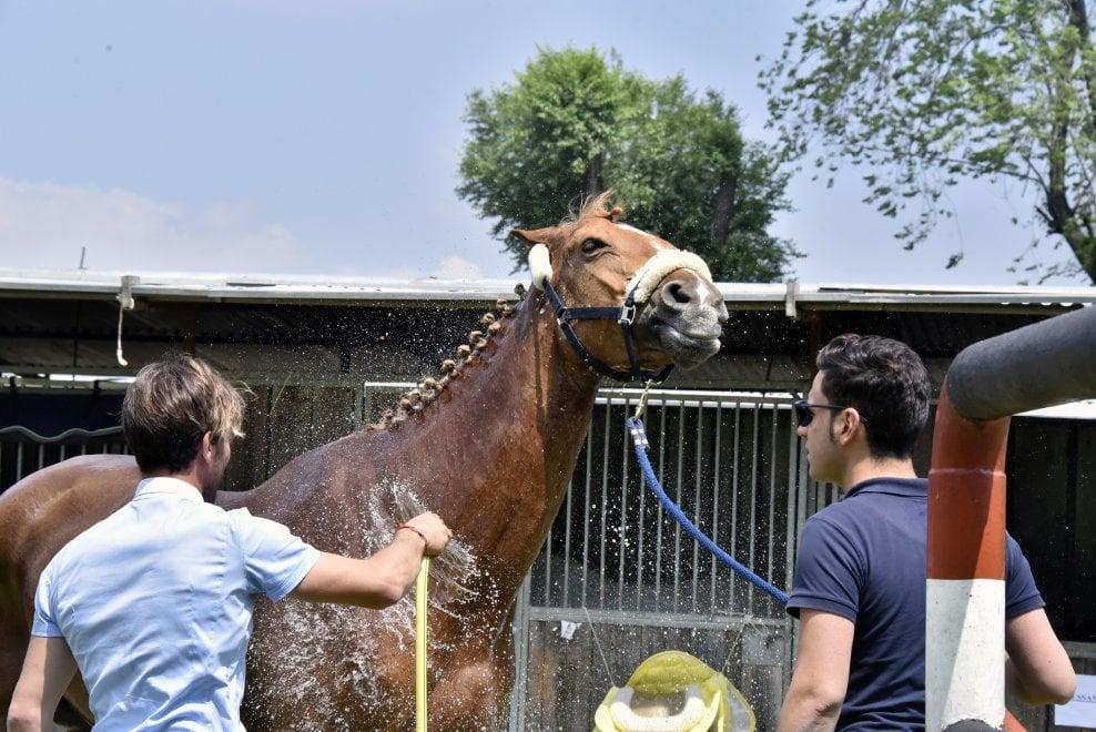 In Piazza D'Armi quattro giorni dedicati all'equitazione