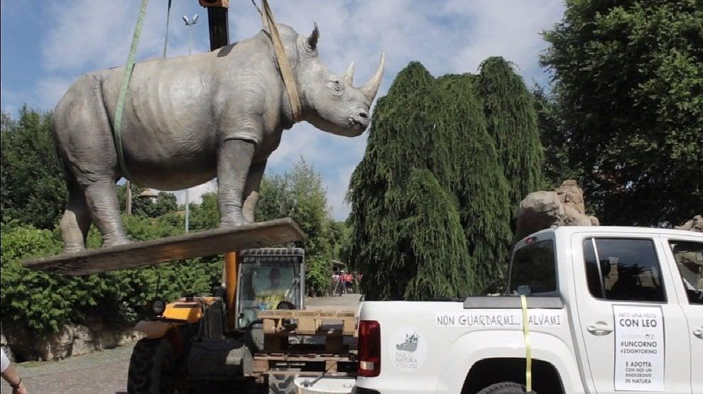 Zoom protegge i rinoceronti bianchi sudafricani