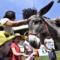 Torino, al Villaggio Coldiretti folla, assaggi, bambini e animali da fattoria