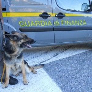 """In autobus da Barcellona a Torino con 18 chili d'""""erba"""" nel bagaglio: giovane arrestata"""