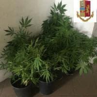 """Torino, il padre coltiva marijuana sul balcone e il figlio lo fa arrestare: """"L'ho visto..."""