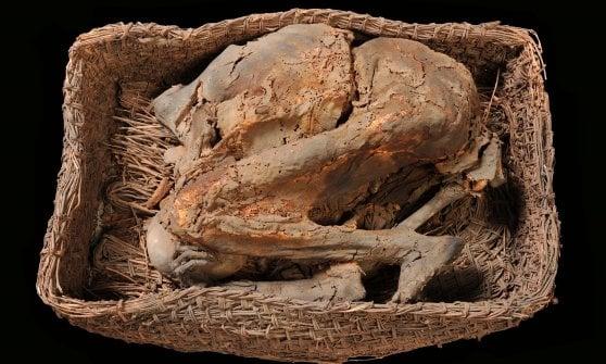 """Torino, dagli scantinati dell'Università riemergono trenta mummie """"perdute"""""""