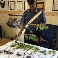 Torino, l'entusiasmo della clientela tradisce i produttori di marijuana