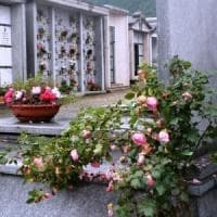 Troppe zanzare nei cimiteri, il Comune chiede di usare fiori finti sulle