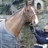 Ivrea, ubriaco a cavallo denunciato per guida in stato di ebbrezza: scatta la sospensione...