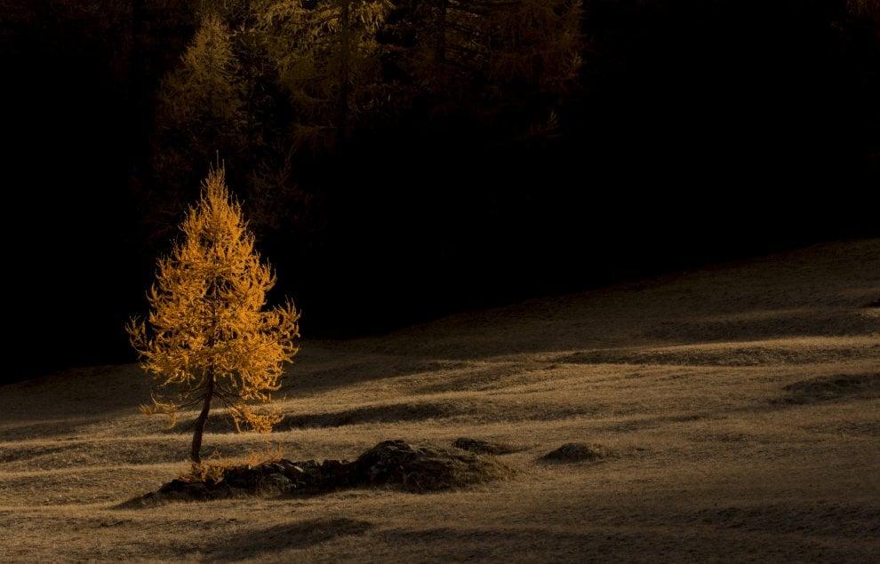 Fotografia, in Piemonte e Trentino le più belle foreste d'Italia