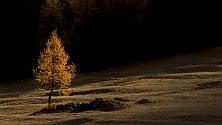 In Piemonte e Trentino le più belle foreste d'Italia