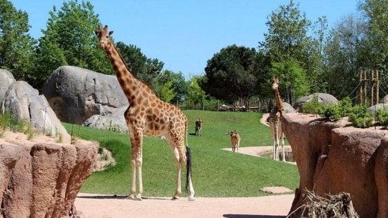 """Cumiana, al Bioparco Zoom il """"safari"""" si fa anche di notte per tutta l'estate"""