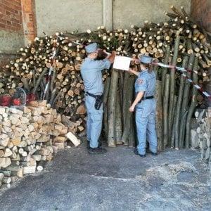 Pinerolo, disbosca centinaia di alberi per rivendere la legna come tronchi da ardere
