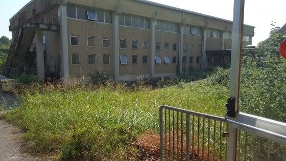 """Torino, erba alta nei giardini delle scuole: """"Poche risorse per tagliarla"""""""