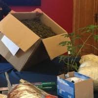 Trecento piante di canapa nel seminterrato, sequestrati 58 kg di marijuana