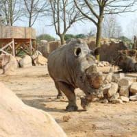 Zoom: raccolti tremila euro per adottare sette rinoceronti in Sudafrica