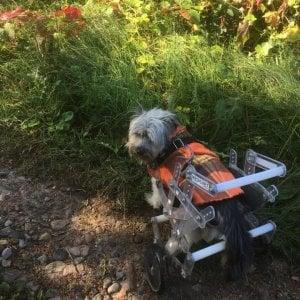 A Gattinara è nata la prima casa di riposo per cani vecchi o disabili