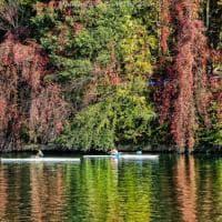 Torino, gli alberi stanchi d'estate si colorano d'autunno