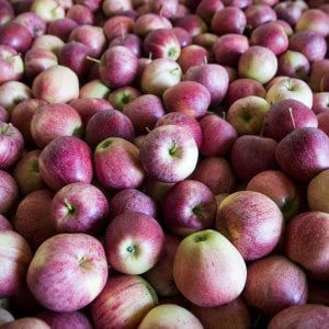 Autunno-inverno, tempo di mele, miele e castagne