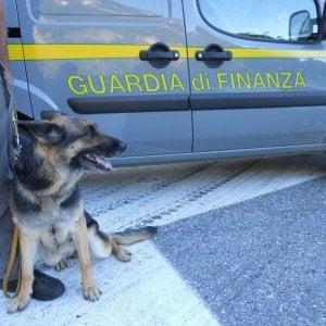 Torino, il cane-finanziere fiuta corriere della droga alla stazione Porta Nuova: arrestato