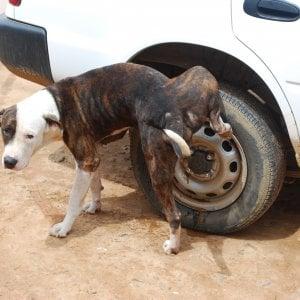 Chivasso, i padroni dei cani ora devono pulire anche la pipì