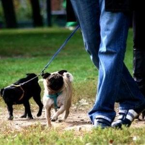 Carmagnola: analisi del dna di tutti i cani per identificare chi non pulisce i marciapiedi dalle deiezioni