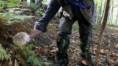 Incidenti in montagna, il record negativo  dei raccoglitori di funghi: 9 morti in un anno