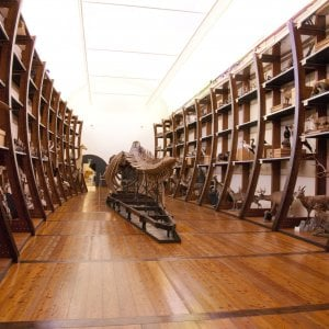 """Torino, dopo cinque anni riapre """"a rate"""" da gennaio il Museo regionale di Scienze Naturali"""