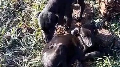 Muoiono di stenti due cucciole abbandonate ad Isola d'Asti, denunciato il responsabile