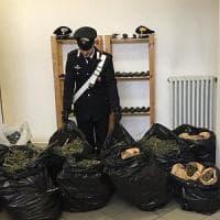Cavagnolo, all'arrivo dei carabinieri abbandonano 15 chili di marijuana