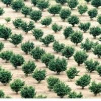 Monferrato, rade al suolo un bosco per piantare noccioli, agricoltore denunciato