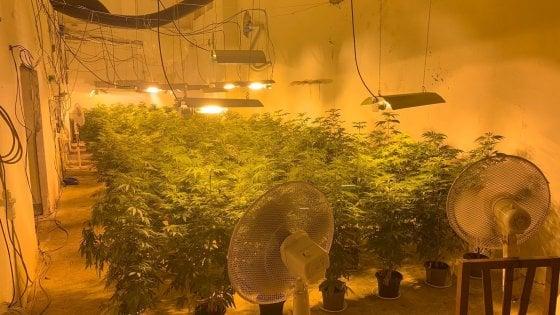 Torino, un passaggio segreto per arrivare alla serra con 300 piantine di marijuana