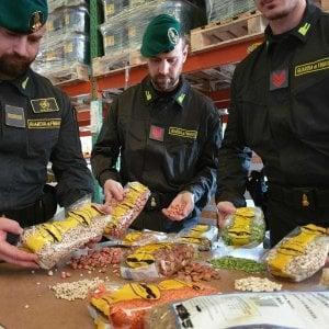 Torino, false lenticchie di Altamura: maxi sequestro di 20 tonnellate di alimenti
